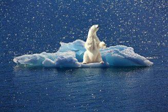Blockchain contra el cambio climático