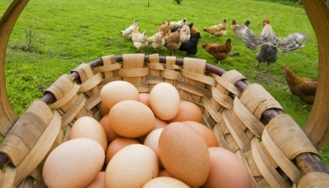 Vottun implanta blockchain de huevos ecológicos