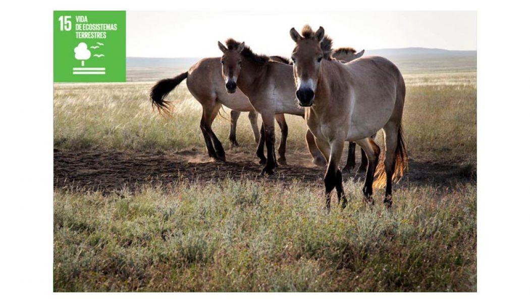 salva un caballo
