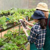 Promover los alimentos locales con blockchain